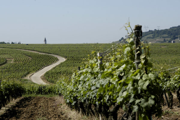 Das Weinbaugebiet entdecken