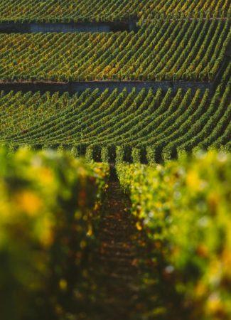 Ausflüge ins Weinbaugebiet