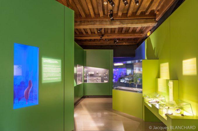 Jardin des sciences & Biodiversité – Museum - 1