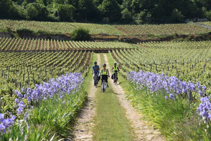 Burgundy-Bike-3