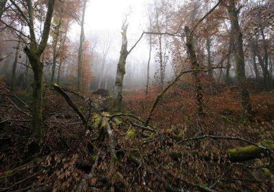 Réserve Naturelle de la Combe Lavaux – Jean Roland - 5