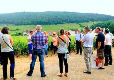 """Clos de bourgogne, ateliers découverte """"vigne et vin"""" - 3"""
