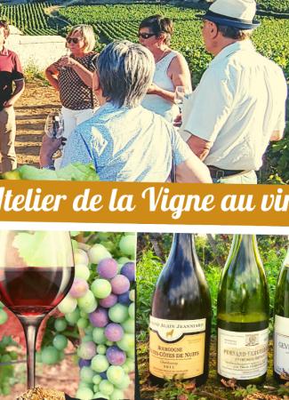 """Clos de bourgogne, ateliers découverte """"vigne et vin"""""""