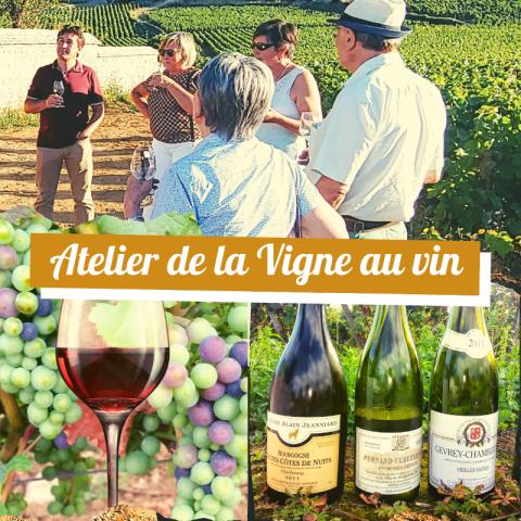 """Clos de bourgogne, ateliers découverte """"vigne et vin"""" - 10"""